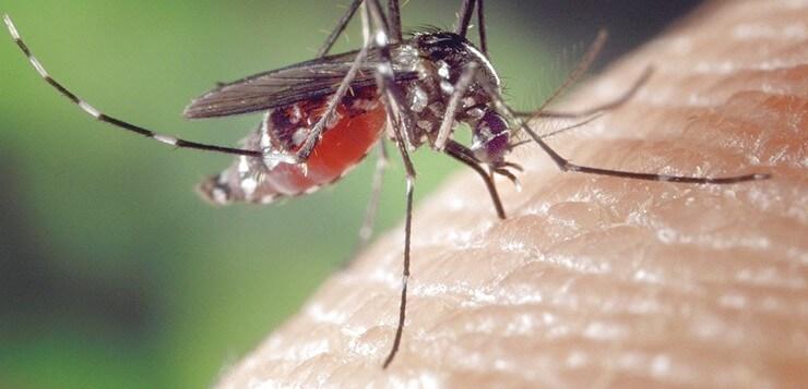 mosquito-1332382_960_720