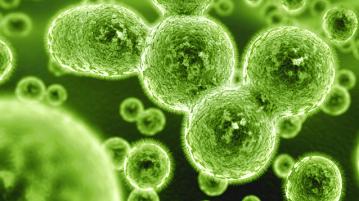 bacteria_superbugs