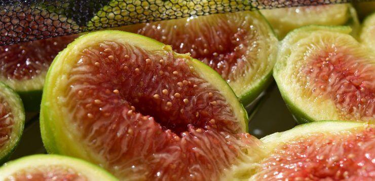 figs-1608247_1280