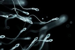 sperm_retrogade_ejaculation